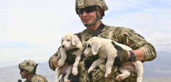 puppies vs army