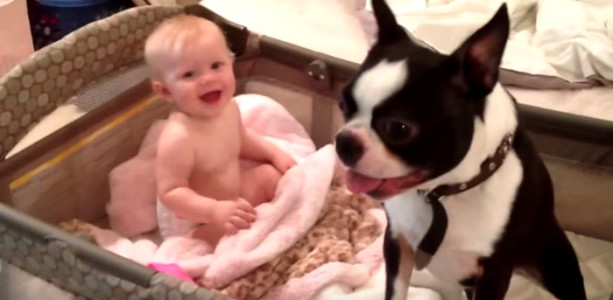 Boston Terrier and baby