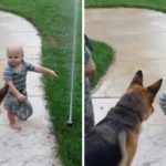 Toddler Tells His Dog To Play With The Sprinkler, The Dog's Reaction Is The Best!