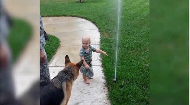 toddler tells dog play with sprinkler