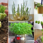 Never Buy Vegetables Again! 18 Foods You Can Easily Regrow From Scraps In Your Kitchen