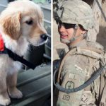 See How One Man & Paws For Purple Hearts Org. Are Saving And Changing Veteran's Lives